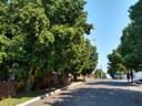 03/10/2019 - Vereador Nor Boeno requer poda de árvores na rua América