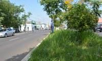 04/04/2019 - Vereador Nor Boeno solicita capina e roçada de canteiro central em trecho da Avenida Pedro Adams Filho no bairro Santo Afonso