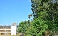 08/04/2019 – Nor Boeno solicita limpeza e poda de árvores na escola Maurício Sirotsky Sobrinho no bairro Santo Afonso