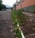 1/12/2020 - Vereador Nor Boeno requer capina e roçada de meio-fio em ruas do bairro São Jorge