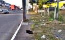19/08/2019 - Nor Boeno pleiteia conserto de infiltração em passeio público na rua Ícaro